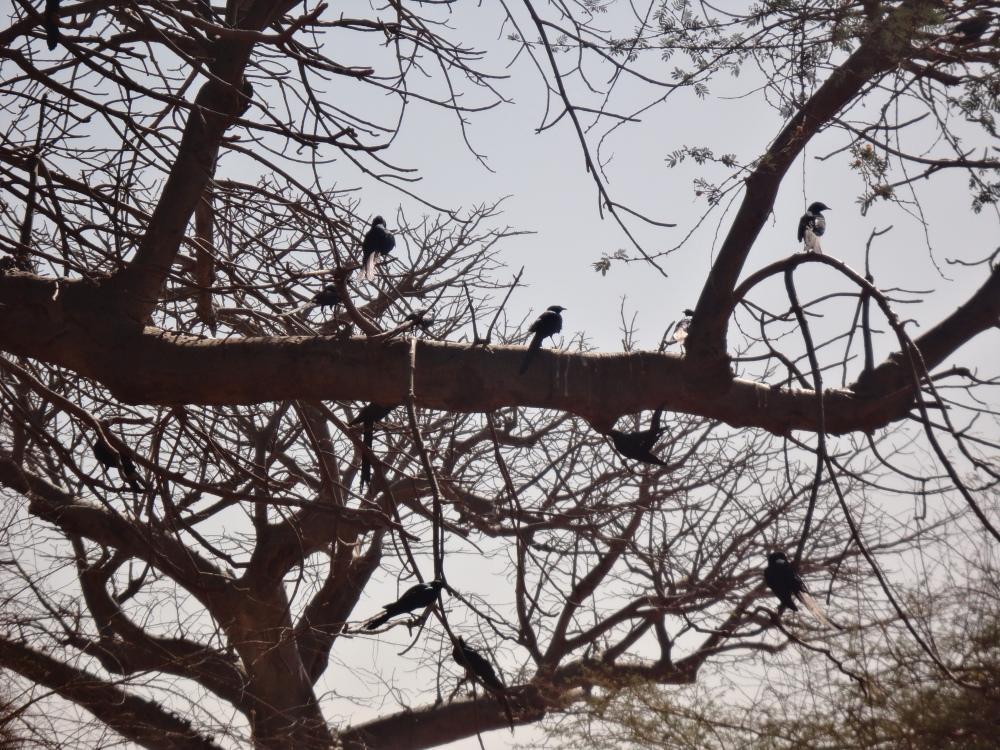 Oiseaux - Bandia