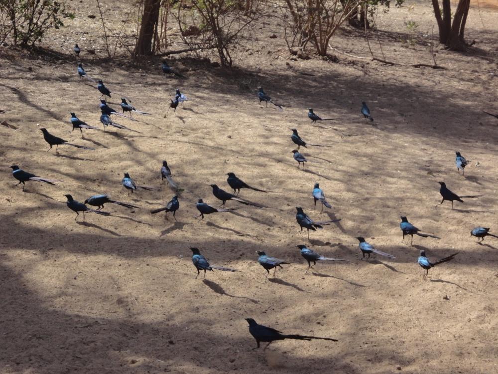 Oiseau - Bandia