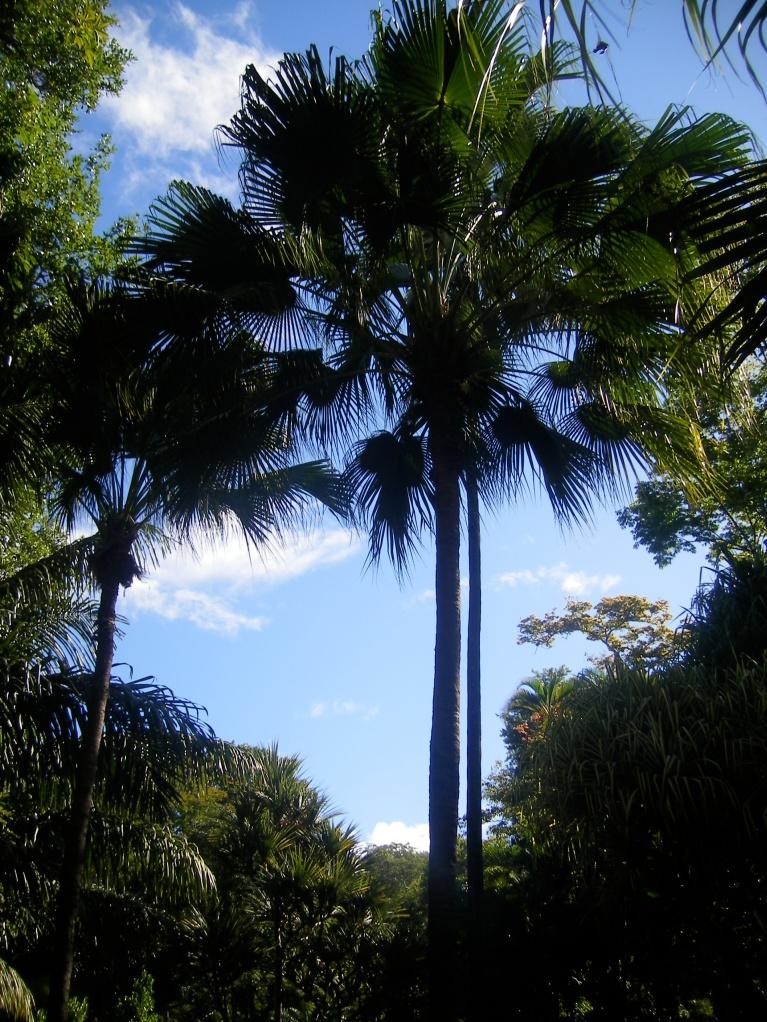 Jardin d'Etat - St-Denis (7)