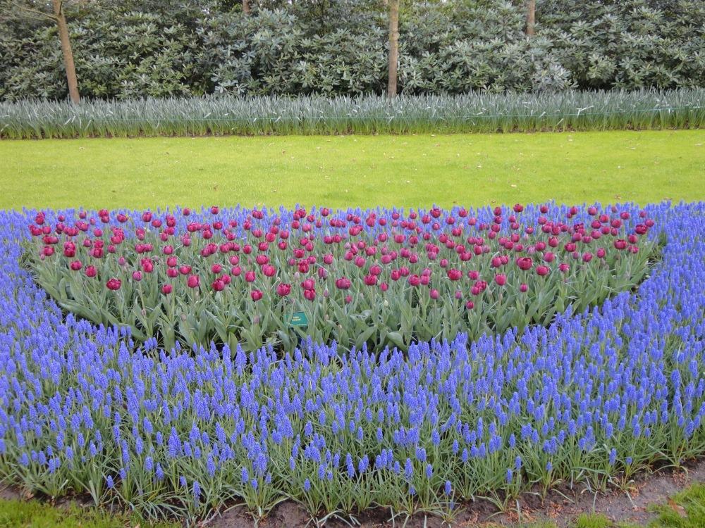 Keukenhof - Composition florale