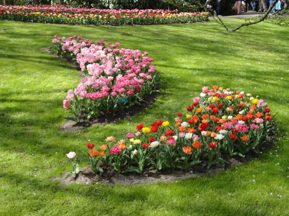 Keukenhof - Compositions florales