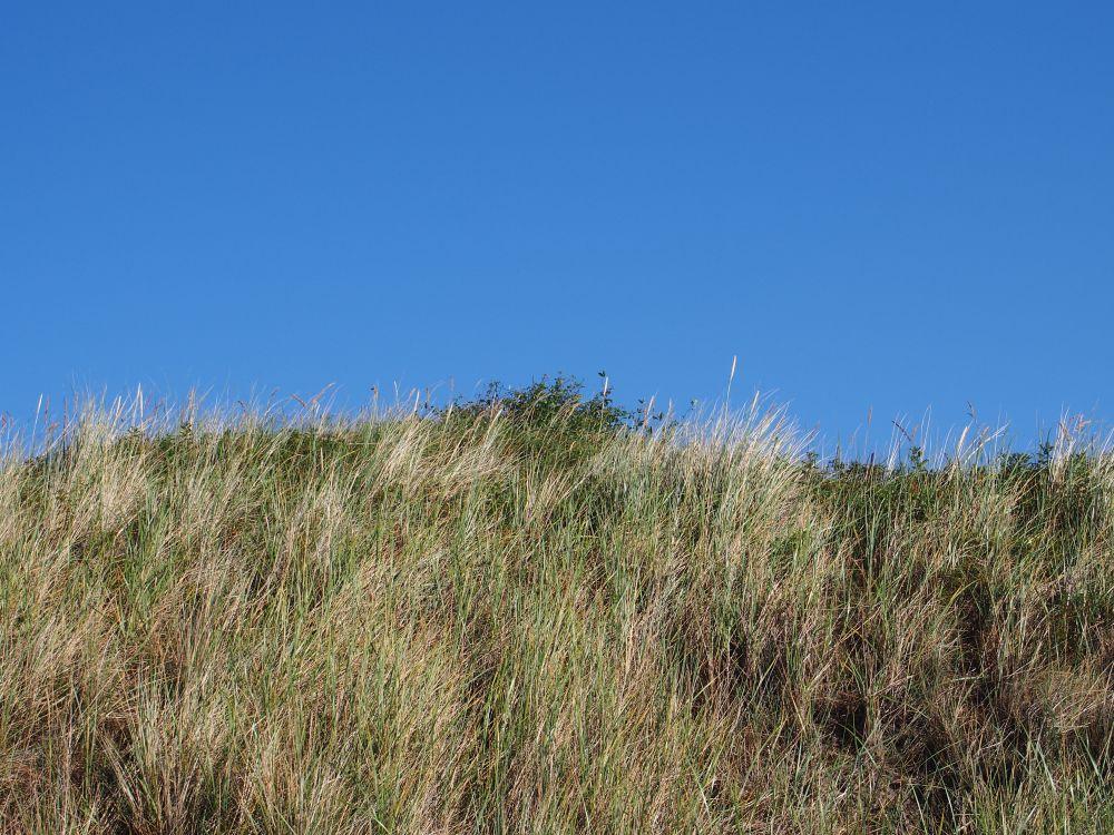 Texel - Dune