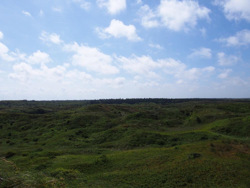 Texel - Dunes & forêt
