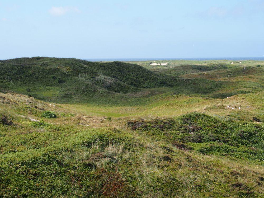 Texel - Dunes