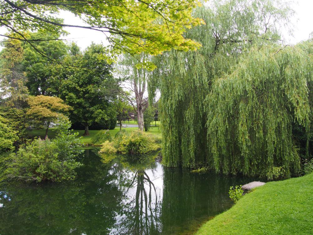 St. Fiachra's Garden