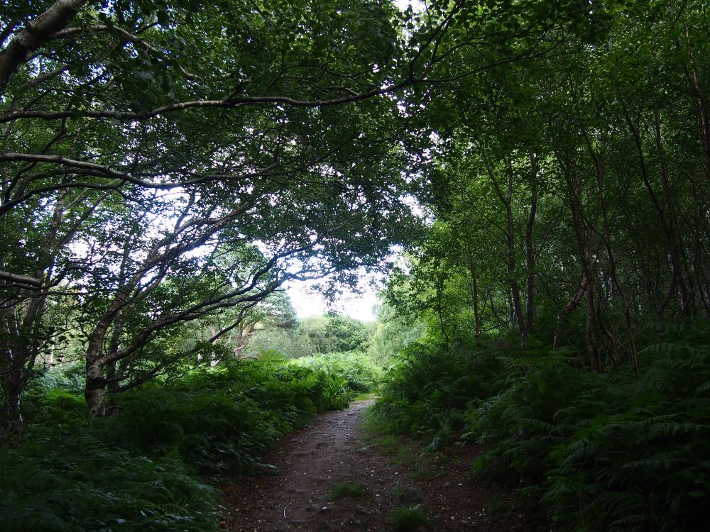 Howth forêt