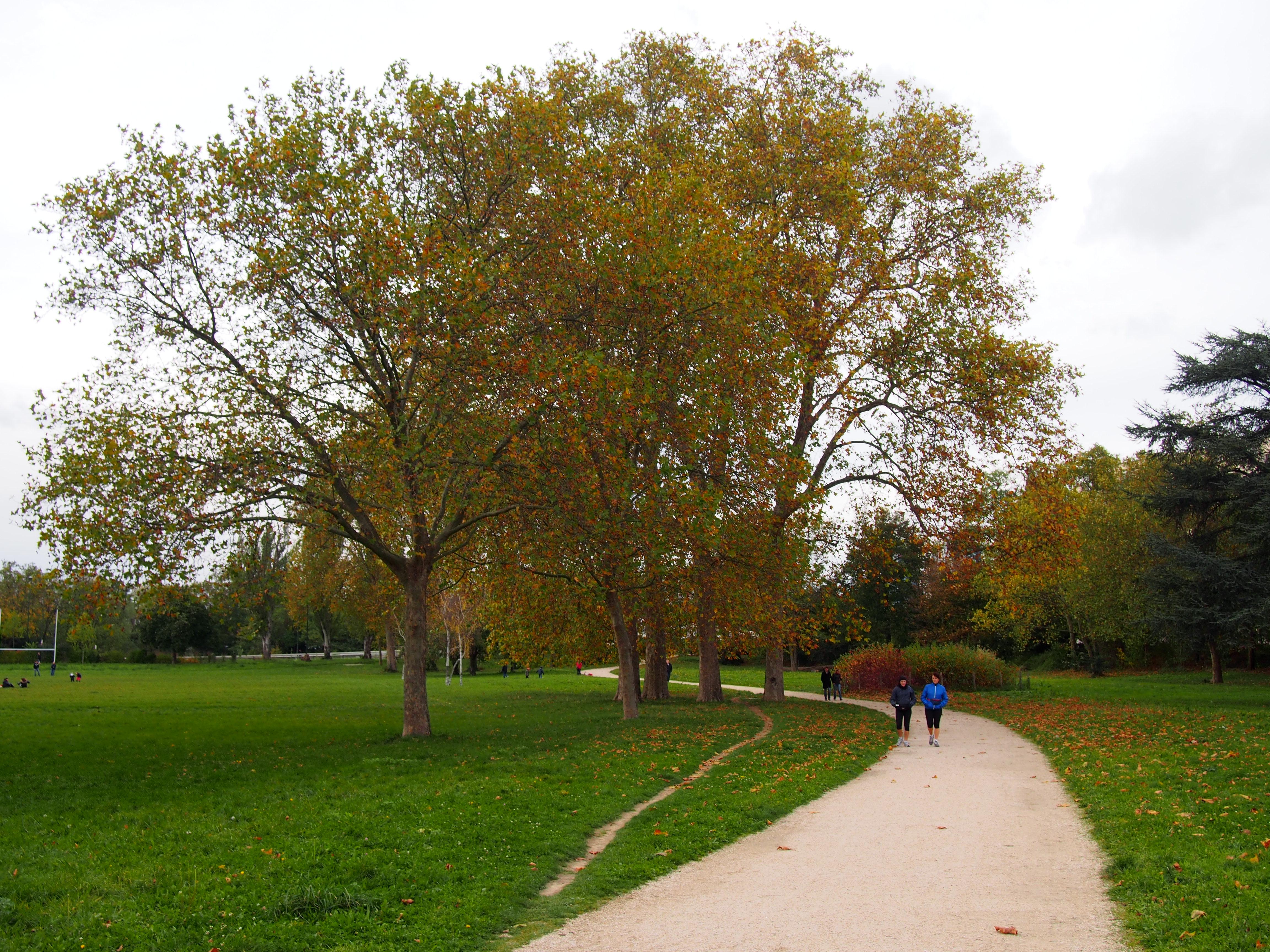 Location Velo Bois De Boulogne - BALADE AUTOMNALE AU BOIS DE BOULOGNE A VELO Claire Line's travelogues