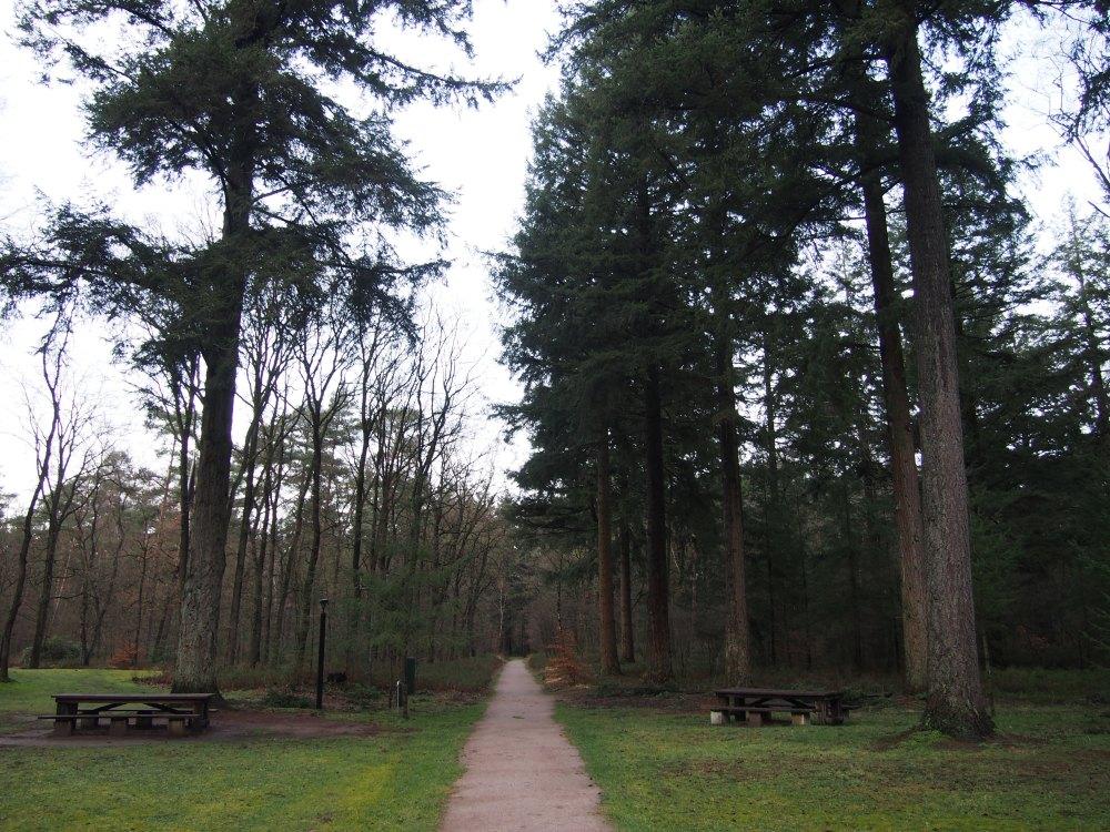 Krôller-Müller jardin