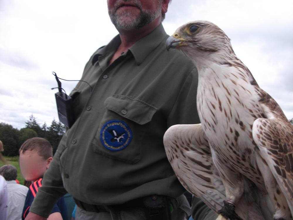 Eagles Flying 11