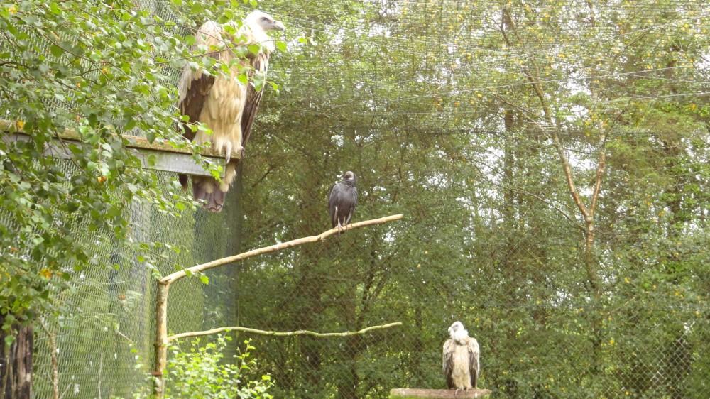 Eagles Flying 2