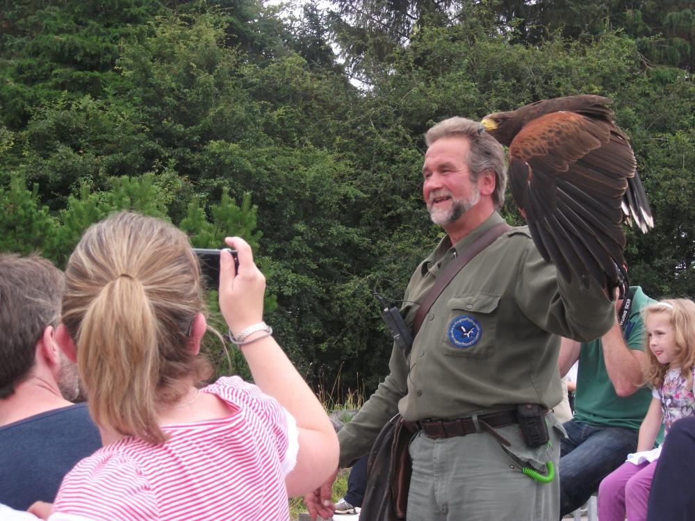 Eagles flying22