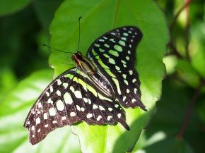 Butterfly Farm - claireline.wordpress.com