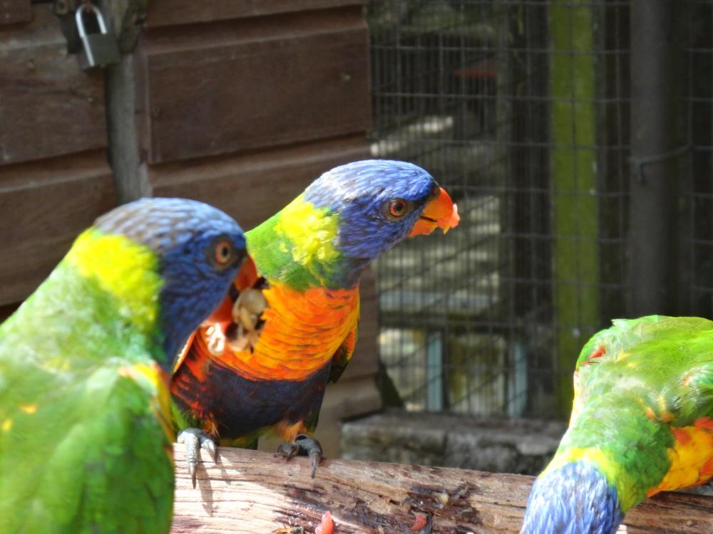 Zoo_de_Guyane_claireline.wordpress.com