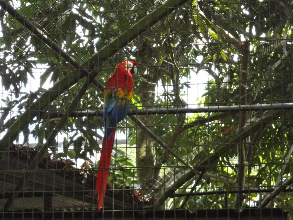 Zoo_de_Guyane_claireline.wordpress.com13