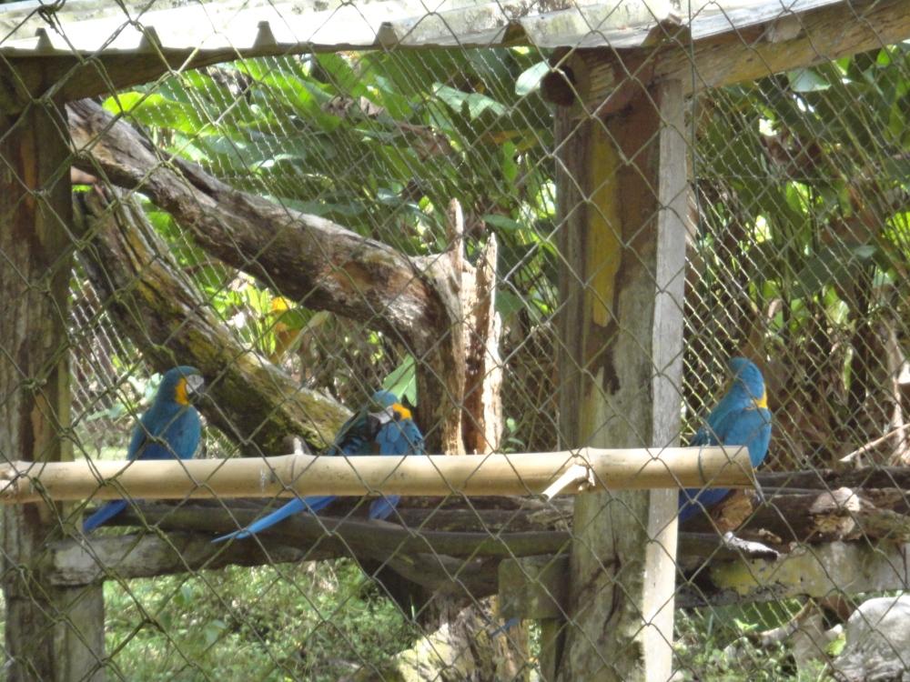 Zoo_de_Guyane_claireline.wordpress.com14