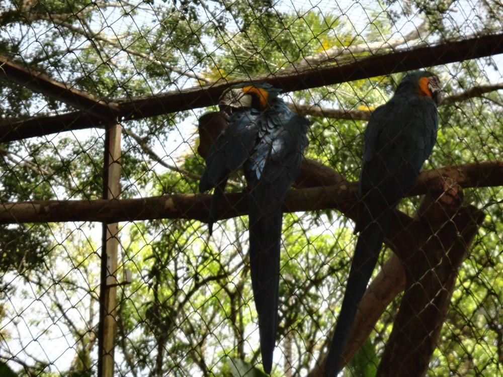 Zoo_de_Guyane_claireline.wordpress.com15