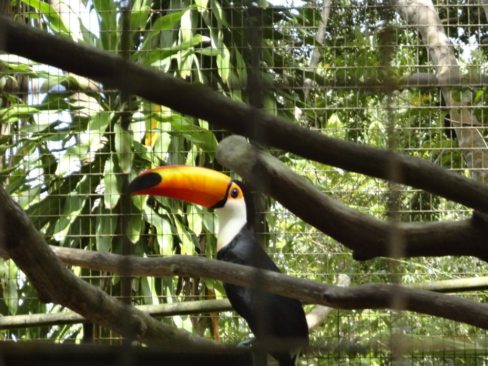 Zoo_de_Guyane_claireline.wordpress.com16