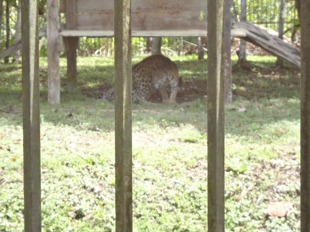Zoo_de_Guyane_claireline.wordpress.com19