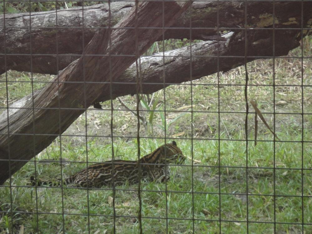Zoo_de_Guyane_claireline.wordpress.com22