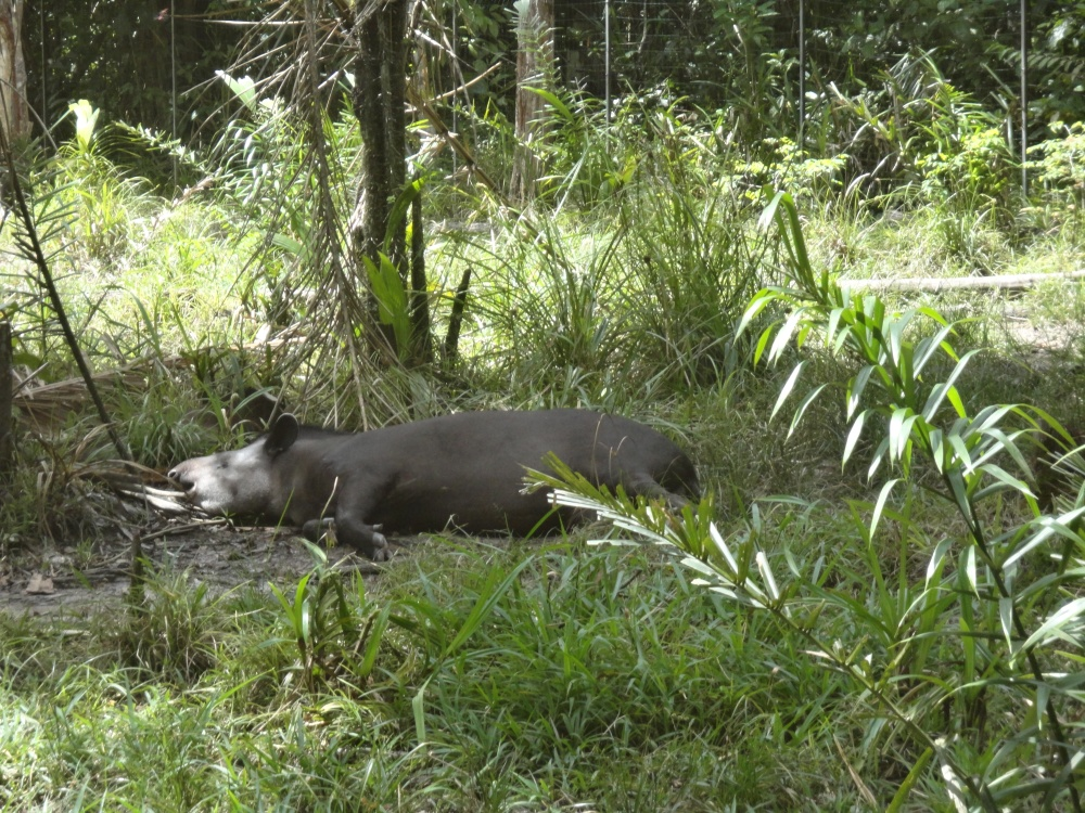 Zoo_de_Guyane_claireline.wordpress.com30