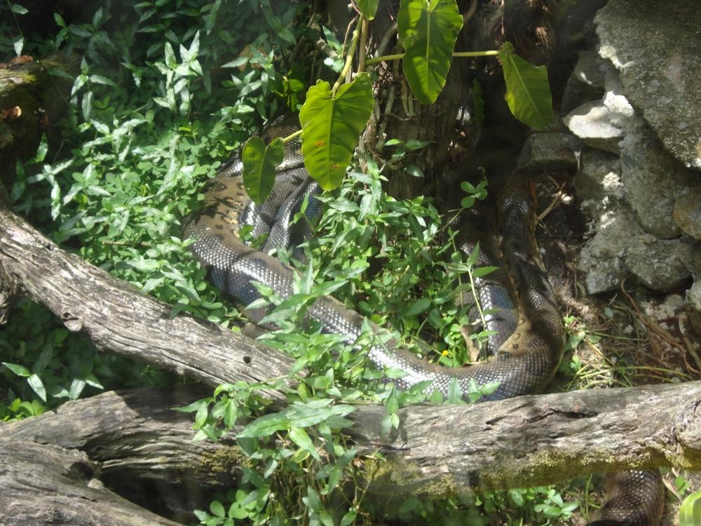 Zoo_de_Guyane_claireline.wordpress.com39