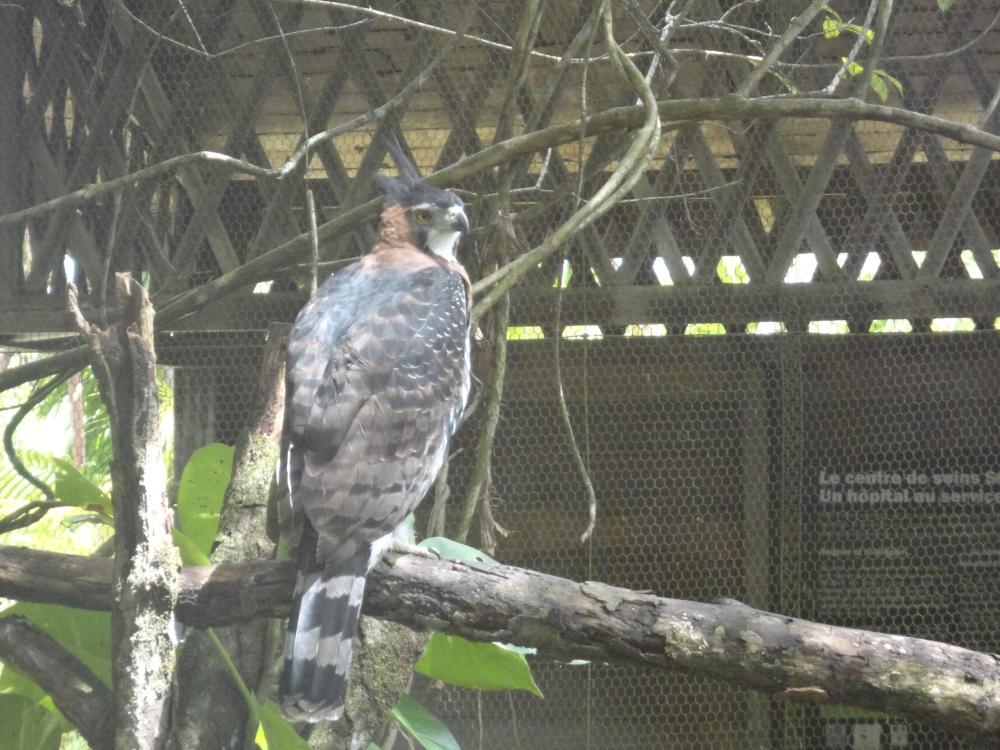 Zoo_de_Guyane_claireline.wordpress.com41