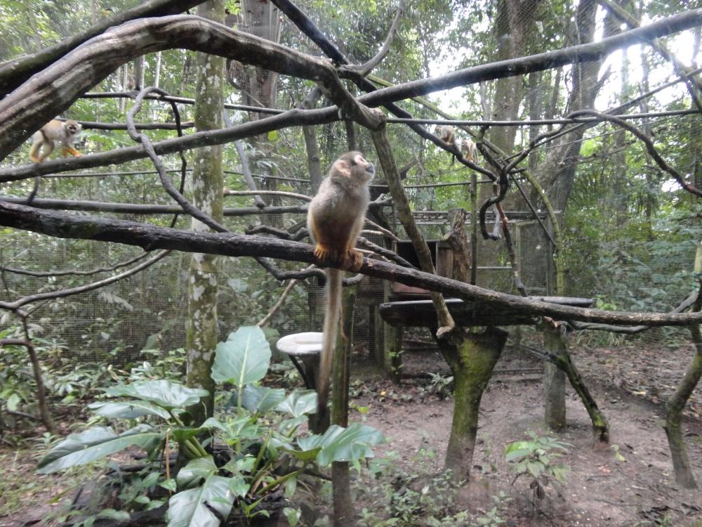 Zoo_de_Guyane_claireline.wordpress.com42