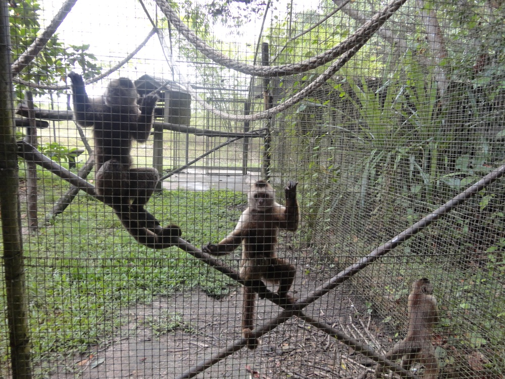 Zoo_de_Guyane_claireline.wordpress.com43