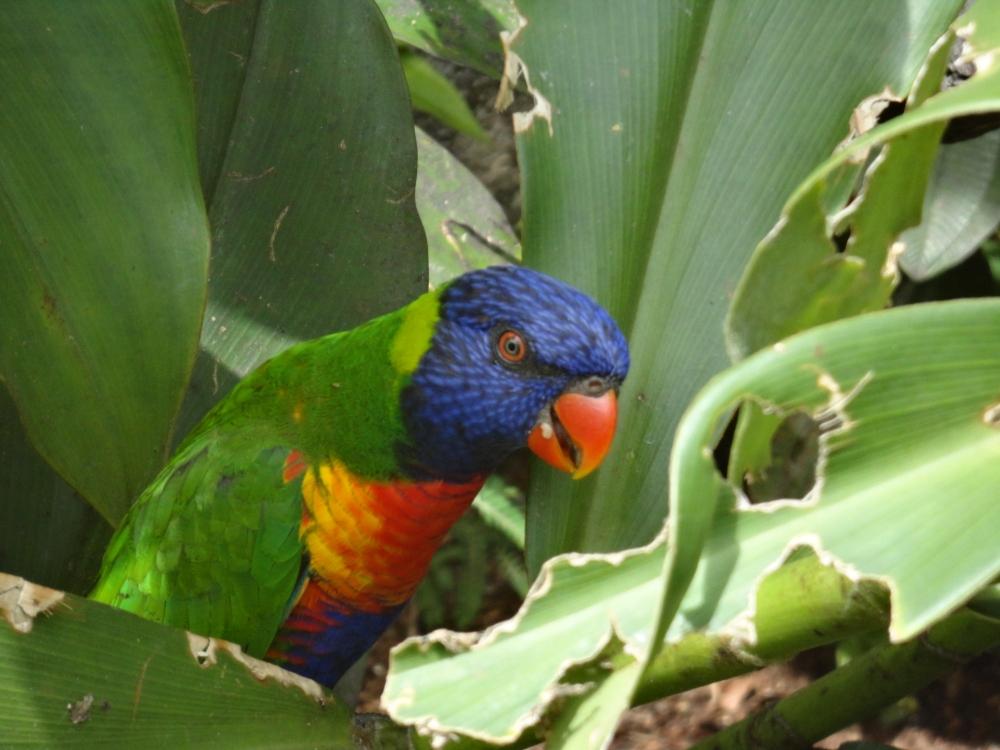 Zoo_de_Guyane_claireline.wordpress.com6