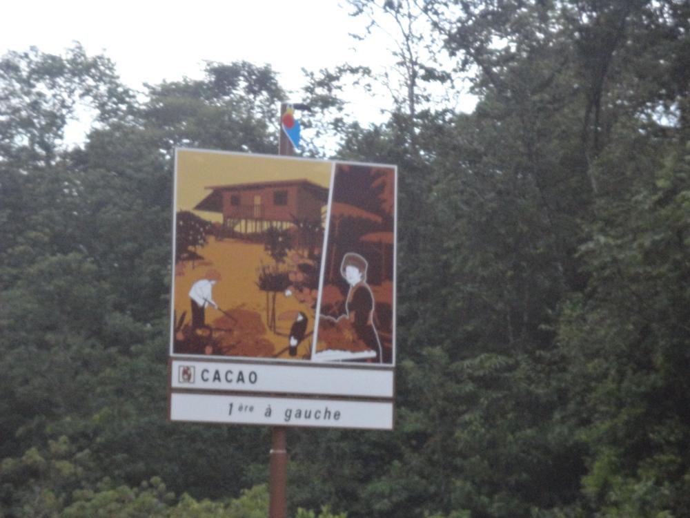 Cacao_Guyane_Claireline.wordpress.com