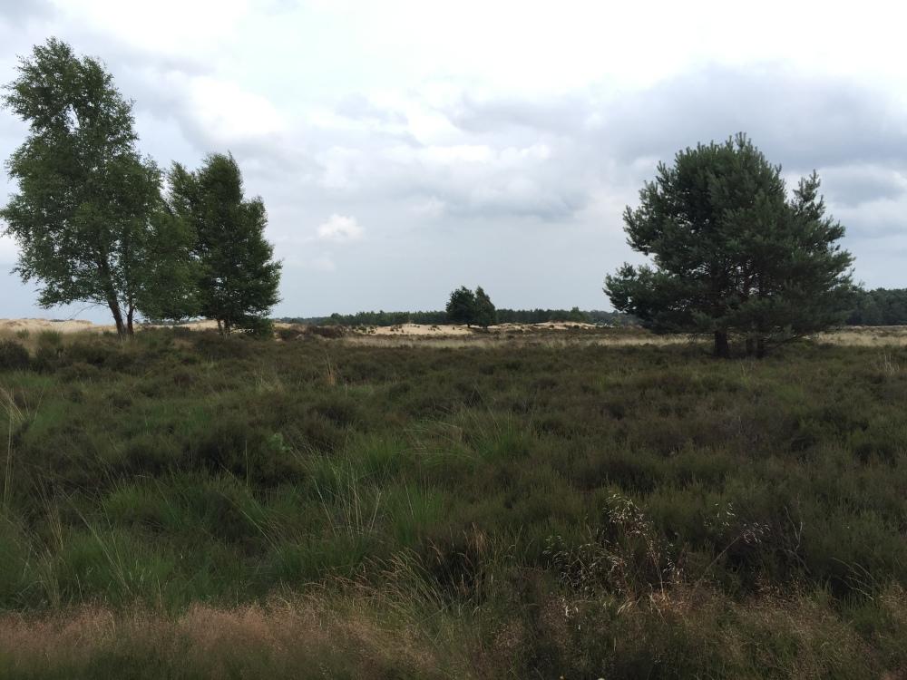Nationaal Park De Loonse en Drunense Duinen_Claireline.wordpress.com